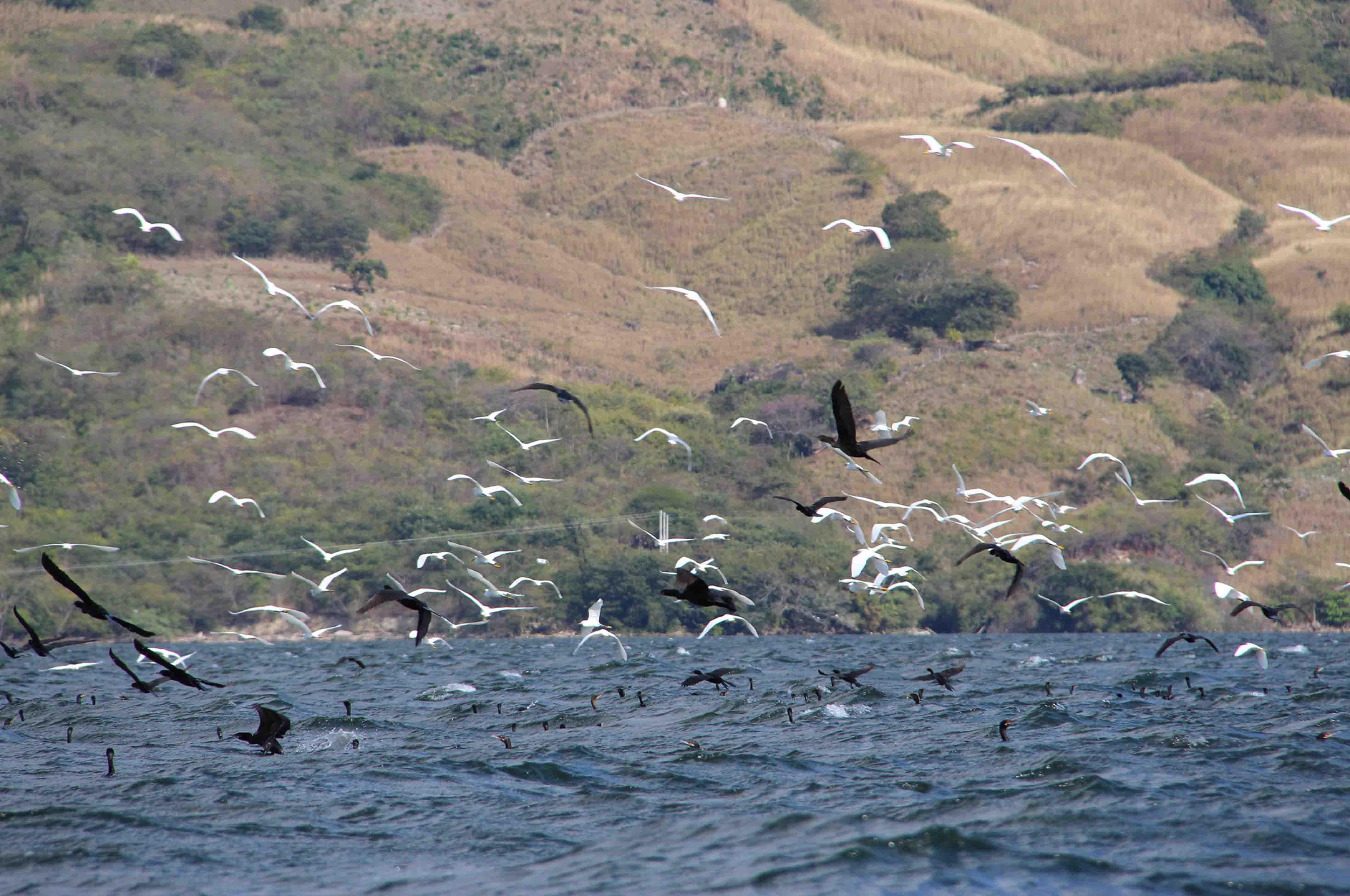 Aves del Sumidero